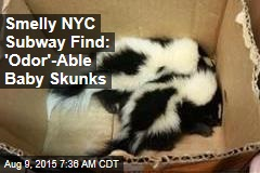 Smelly NYC Subway Find: 'Odor'-Able Baby Skunks