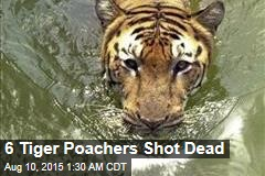 6 Tiger Poachers Shot Dead