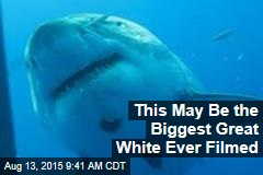 This May Be the Biggest Great White Ever Filmed