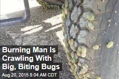 Burning Man Is Crawling With Big, Biting Bugs