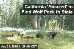 California 'Amazed' to Find Wolf Pack in State