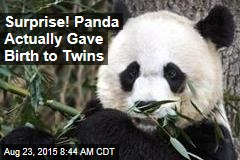 Surprise! Panda Actually Gave Birth to Twins