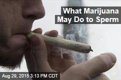 What Marijuana May Do to Sperm
