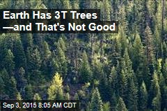 Earth Has 3T Trees —and That's Not Good