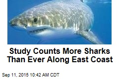 Study Counts More Sharks Than Ever Along East Coast