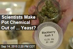 Scientists Make Pot Chemical Out of ... Yeast?