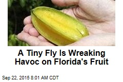 A Tiny Fly Is Wreaking Havoc on Florida's Fruit