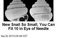 New Snail So Small, You Can Fit 10 in Eye of Needle