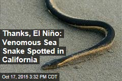 Thanks, El Niño: Poisonous Sea Snake Spotted in California