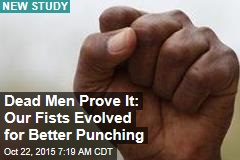 Our Fists Evolved for Better Punching