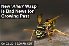 New ' Alien ' Wasp Is Bad News for Growing Pest