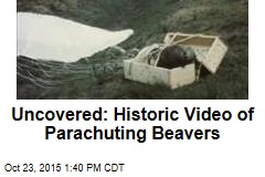 Uncovered: Historic Video of Parachuting Beavers