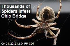 Thousands of Spiders Infest Ohio Bridge