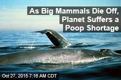 As Mammals Die Off, Planet Suffers a Poop Shortage