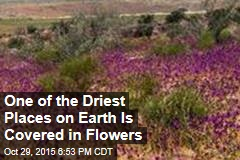 One of the Driest Place on Earth Is Covered in Flowers