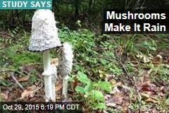Mushrooms Make It Rain