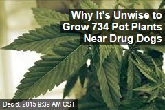 Why It's Unwise to Grow 734 Pot Plants Near Drug Dogs