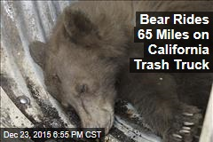 Bear Rides 65 Miles on California Trash Truck