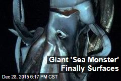 Rare Giant Squid Comes to the Surface