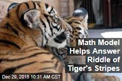 Math Model Helps Answer Riddle of Tiger's Stripes