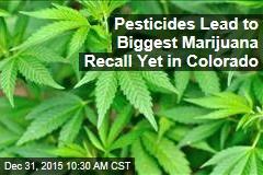 Pesticides Lead to Biggest Marijuana Recall Yet in Colorado