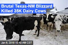 Brutal Texas-NM Blizzard Killed 35K Dairy Cows