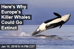 Here's Why Europe's Killer Whales Could Go Extinct