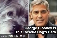 George Clooney Is This Rescue Dog's Hero