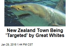 New Zealand Town Being 'Targeted' by Great Whites