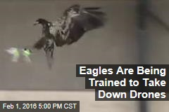 Eagles Are Being Trained to Take Down Drones