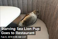 Starving Sea Lion Pup Goes to Restaurant