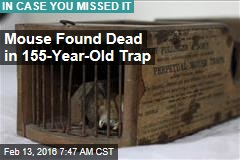 Mouse Found Dead in 155-Year-Old Trap