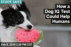 How a Dog IQ Test Could Help Humans