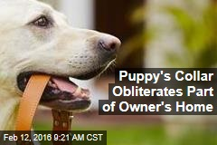 Puppy's Collar Obliterates Part of Owner's Home