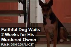 Faithful Dog Waits 2 Weeks for His Murdered Owner