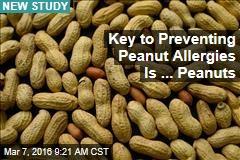 Key to Preventing Peanut Allergies Is ... Peanuts