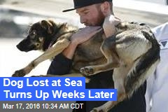 Dog Lost at Sea Turns Up Weeks Later