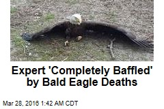 Bald Eagle Die-Offs in 2 States Investigated
