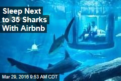 Sleep Next to 35 Sharks With Airbnb