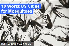 The 10 Worst US Cities for Mosquitoes
