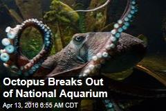 Octopus Breaks Out of National Aquarium