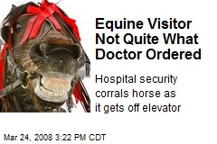 Equine Visitor Not Quite What Doctor Ordered