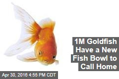 1M Goldfish Have a New Fish Bowl to Call Home
