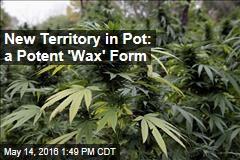 New Territory in Pot: a Potent 'Wax' Form