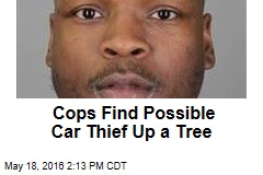 Cops Find Possible Car Thief Up a Tree
