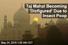 Insect Poop Is Wrecking the Taj Mahal