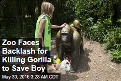 Zoo Faces Backlash for Killing Gorilla to Save Boy