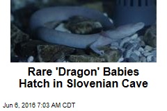 Rare 'Dragon' Babies Hatch in Slovenian Cave
