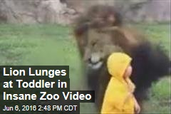 Lion Lunges at Toddler in Insane Zoo Video