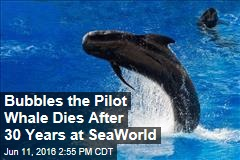 Bubbles the Pilot Whale Dies After 30 Years at SeaWorld